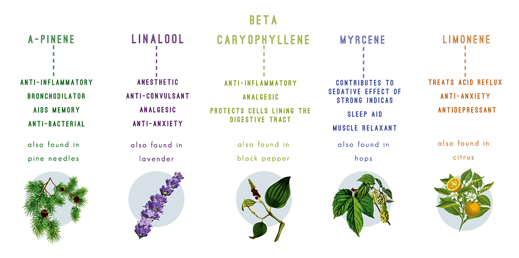 Cannabis Terpenes: An Understanding Of The Commonly Unknown
