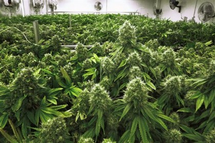 Is Delta-8 THC the fastest growing product of the Cannabis industry?